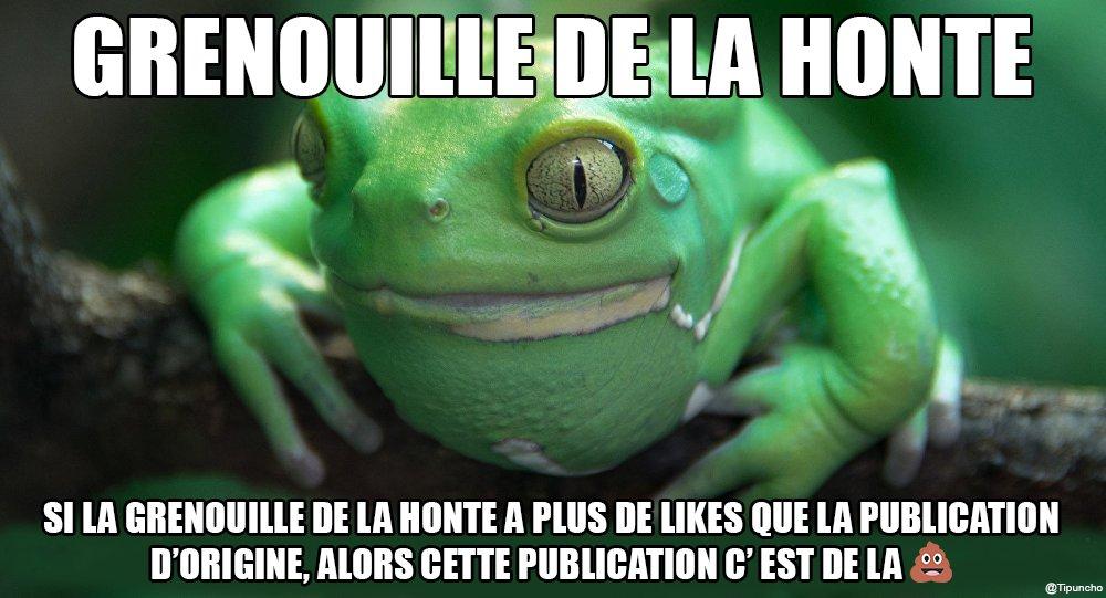 grenouille-honte